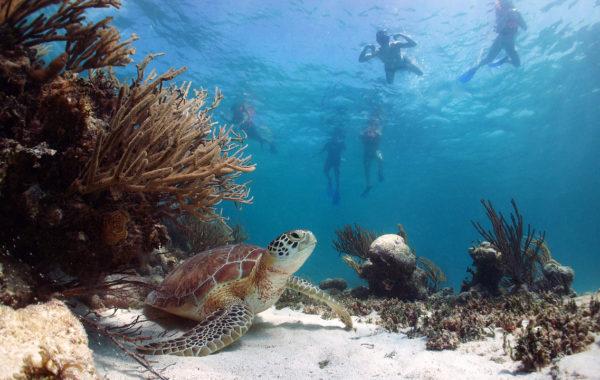 Mořské želvy a cenoty