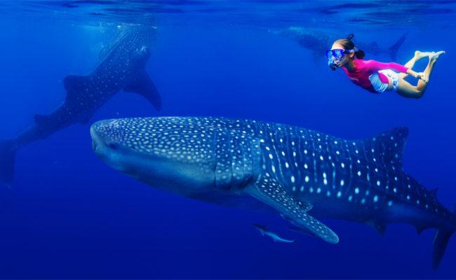potapeni-se-zraloky-velrybimi-kde