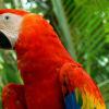 La Reserva de la Biosfera Maya