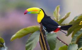 Nicaragua a Kostarika