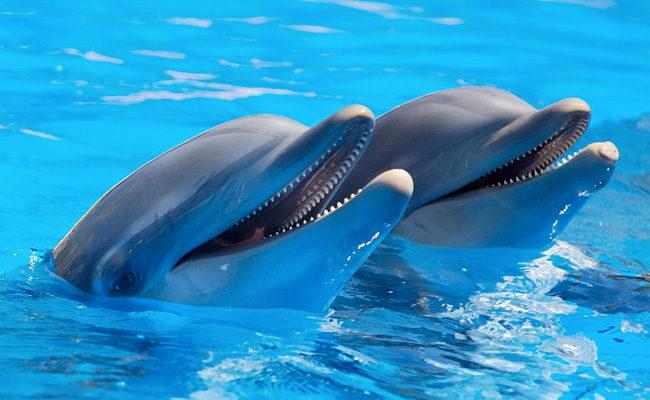 delfini-mexiko